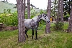 Opinión el caballo que pasta Imagen de archivo