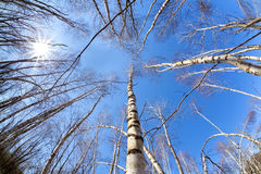 Opinión superior sobre árboles y el sol del nacimiento Fotos de archivo libres de regalías