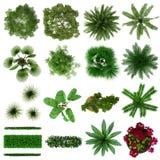 Opinião de plano da coleção das plantas tropicais Fotos de Stock Royalty Free