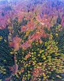 Opiniones aéreas espectaculares del abejón sobre un bosque en las colinas de Jura Mountains suizo foto de archivo libre de regalías