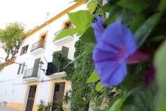 Opiniones agradables el santo Antonio de Ibiza Imagenes de archivo
