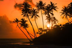 Opiniones de la puesta del sol en Galle a lo largo de la costa costa imágenes de archivo libres de regalías