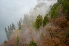 Opiniones del bosque y de la niebla imagen de archivo