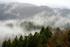 Opiniones del bosque y de la niebla fotos de archivo