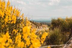 Opiniones del camino de las flores amarillas imagen de archivo libre de regalías