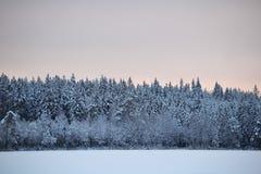 Opiniones del invierno Imagen de archivo