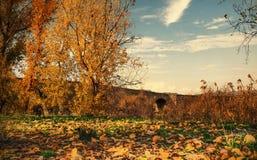 Opiniones del otoño de Diyarbakir del pavo Vista del 'puente histórico de Devegecidi imagen de archivo libre de regalías