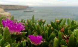 Opiniones del Wildflower Fotografía de archivo libre de regalías
