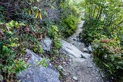 Opiniones escénicas del paisaje en el bosque del Estado del isgah Fotografía de archivo
