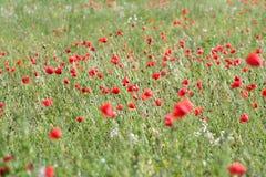 Opio Foto de archivo libre de regalías