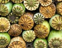 Opium poppy seed capsule Royalty Free Stock Images