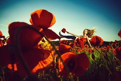Opium, woman in field of poppy seed royalty free stock images