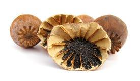 opiumowy maczek Zdjęcie Stock