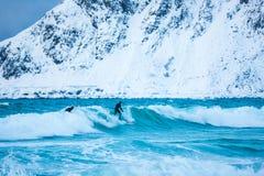 Opleidende surfers in koude wateren van Lofotens Stock Foto