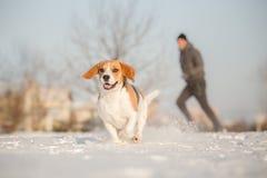 Opleiding buiten in koud sneeuwweer met brakhond stock foto