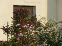 Opleiding concentreert lessen op bloemen in de stad Stock Afbeeldingen
