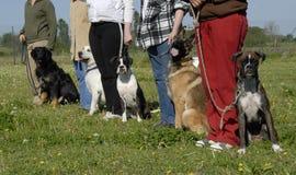 Opleiding met honden stock foto