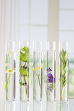 Oplossing van geneeskrachtige installaties en bloemen - stock fotografie