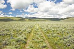Opona ślada przez wiosna kwiatów Centennial dolina blisko Lakeview, MT obraz royalty free
