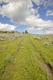 Opona ślada przez wiosna kwiatów Centennial dolina blisko Lakeview, MT obraz stock