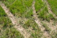Opona tropi na Zielonej trawie, miastowy non asfaltowy ruchu drogowego sposób z t Zdjęcia Royalty Free