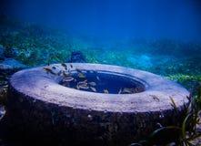 Opona Znajdujący Podwodny Obrazy Royalty Free