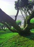 Oporto träd Sk?nheten i natur royaltyfri fotografi