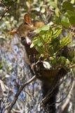 Opossum Stock Foto's