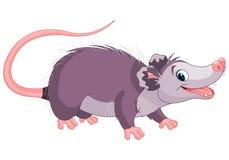 Opossum Royalty Free Stock Photo