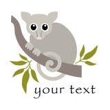 Opossum commun de Ringtail - Australien illustration stock