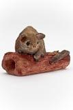 Opossum op een logboek royalty-vrije stock foto