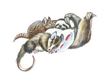 Opossum, sloth and armadillos Royalty Free Stock Photos