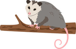 Opossum sul ramo Immagini Stock