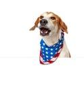 Opowiadać Amerykańskiego Patriotycznego psa Z sztandarem Zdjęcie Royalty Free