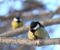 Opowiadać ptaki Obraz Stock