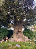 Opowiadać szczęśliwego drzewa jako pojęcie zielony pokój Czarodziejski drzewo Obraz Royalty Free