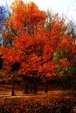 Opowieść stary drzewo Zdjęcie Royalty Free