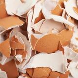 Oppervlakte met ei datshells wordt behandeld Stock Afbeeldingen