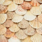 Oppervlakte met shells wordt behandeld die Royalty-vrije Stock Afbeeldingen
