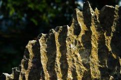 Oppervlakte rotsachtig kalksteen, grijze kalksteen en achtergrond in Thailand Royalty-vrije Stock Foto