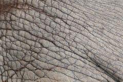 Oppervlakte van de huidachtergrond van het Olifantsleer Stock Fotografie