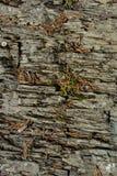 Oppervlakte van de rots met spruiten van droog gras royalty-vrije stock foto