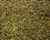 Oppervlakte van de vijver met gevallen bladeren en onkruid in de herfst wordt behandeld die Royalty-vrije Stock Fotografie