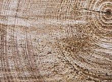Oppervlakte van een boomstam van de besnoeiingsboom Royalty-vrije Stock Afbeeldingen