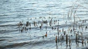 Oppervlakte van golvend water met riviervegetatie stock videobeelden