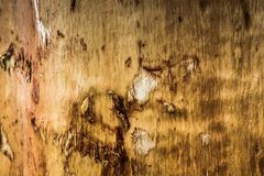 Oppervlakte van houten Royalty-vrije Stock Foto's