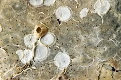 Oppervlakte van shell Stock Foto's