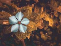 Тоны цветка выходят природе мобильная съемка oppof1s мечтательный стоковые фотографии rf