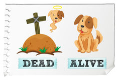 Opposite adjective with dead and alive Royalty Free Stock Images