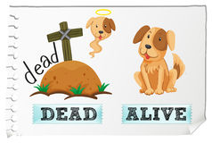 Opposite adjectives dead and alive Stock Photos